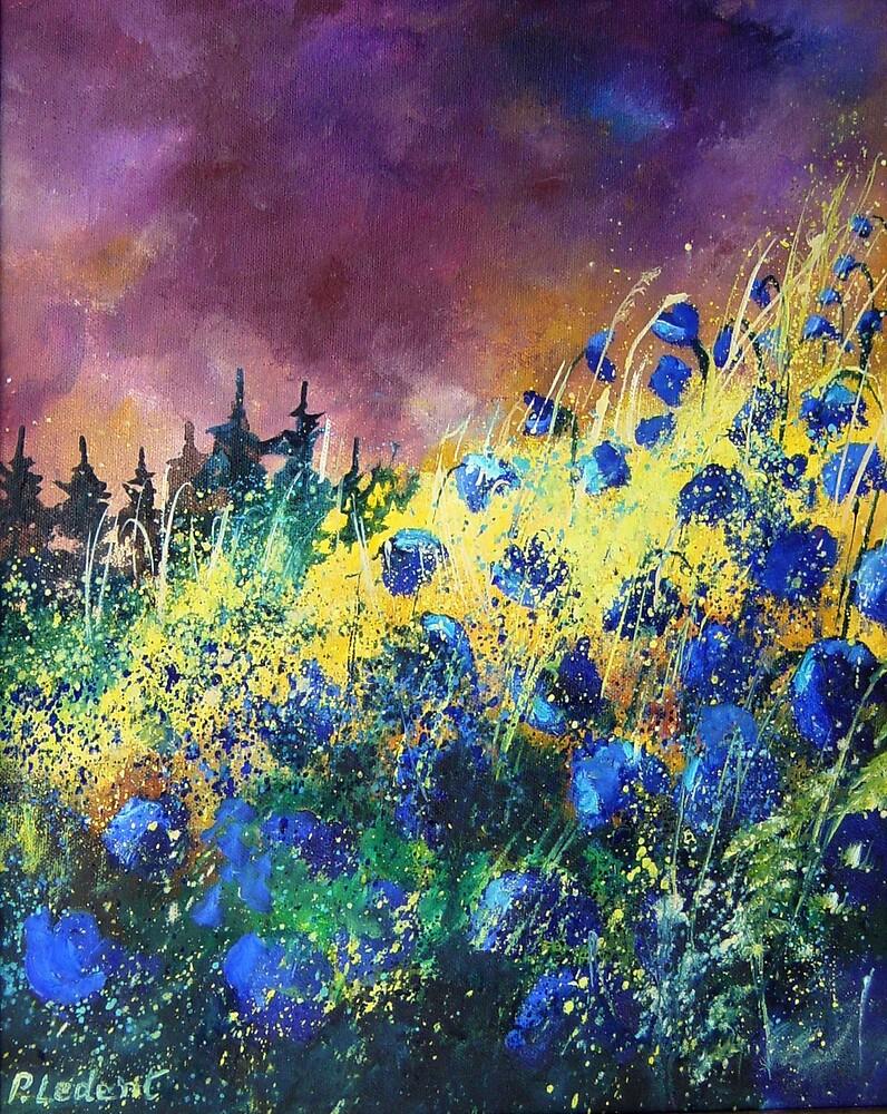 blue cornflowers by calimero