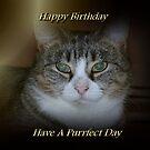 Happy Birthday (Have A Purrfect Day) by EnchantedDreams