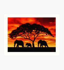 Akazien-Elefant-Sonnenuntergang Kunstdruck