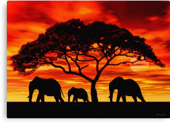 Quot Acacia Elephant Sunset Quot Canvas Prints By Walter Colvin