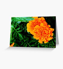 Marigolds.... Greeting Card