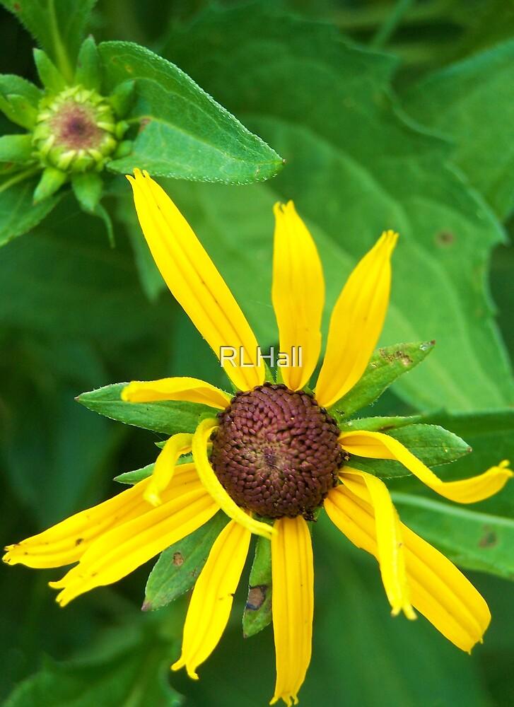 A Flower's Dance by RLHall