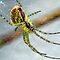 Arachnids - includes harvestmen and scorpions