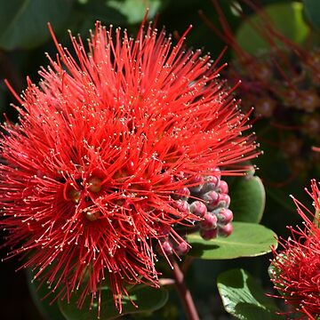 Simply Red by lizdomett