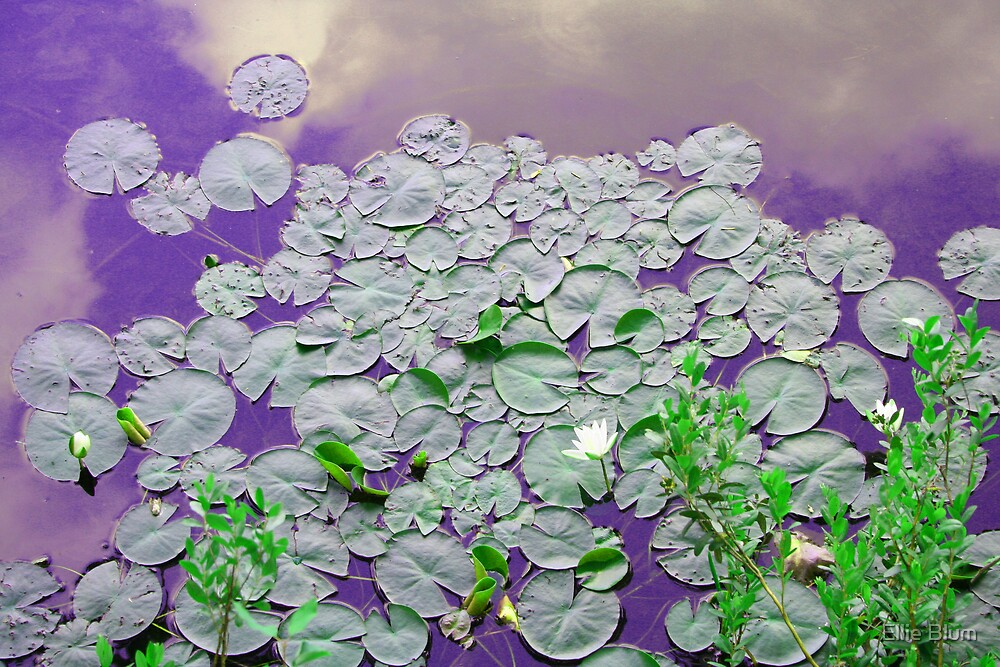 Lilly pads by Ellie Blum