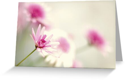 imagining {in pink} by sapaho