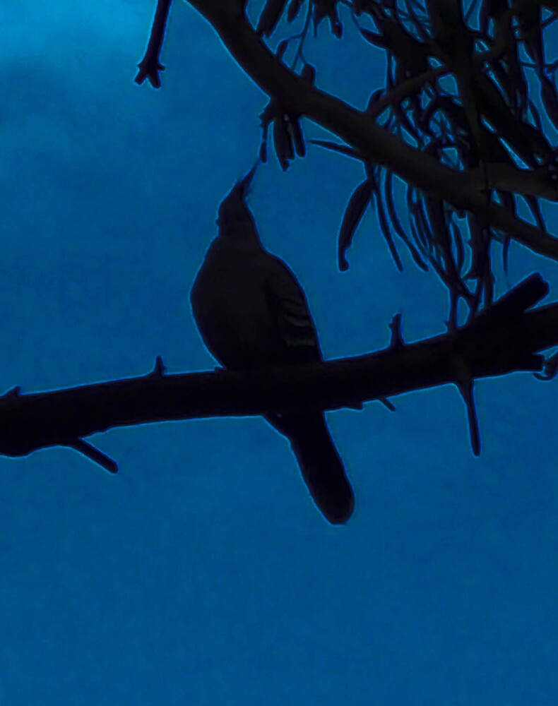 Bird in the sky by footyman