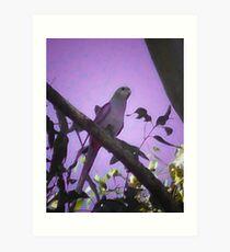 purple bird Art Print