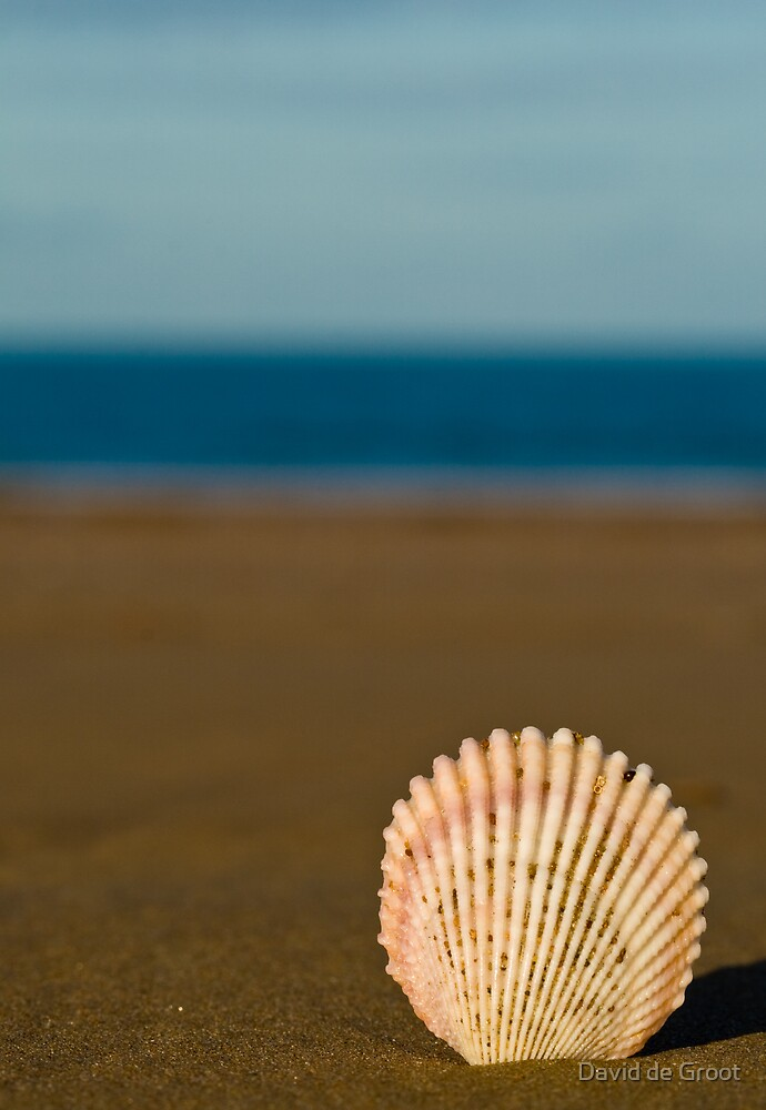 Shell by the Sea by David de Groot