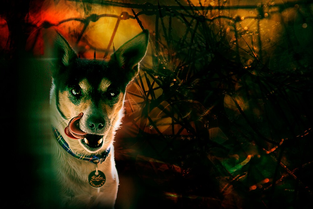 the terrier of the baskervilles by rozdesign