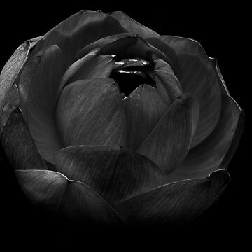 Flower - B&W by thali6