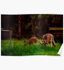 early morning visitors Poster