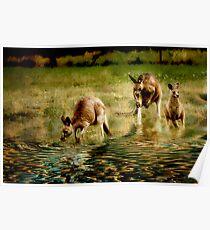 three kangaroos Poster