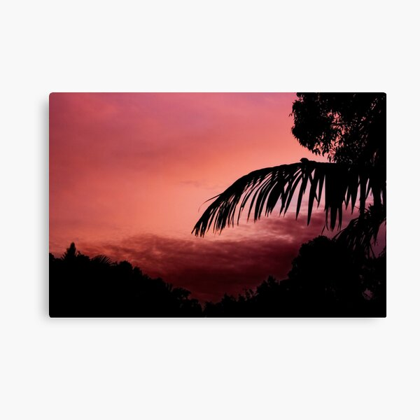 Colour of Pink Canvas Print