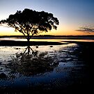 Evening Tree by Andrew Cumberland