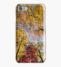 Looking Straight Up at Fall Foliage iPhone Case/Skin