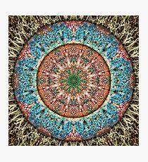 Lichen Stone Photographic Print