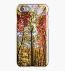 Sun shining through the colorful fall trees iPhone Case/Skin