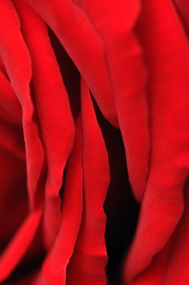 Velvet Petals by Charles Howarth
