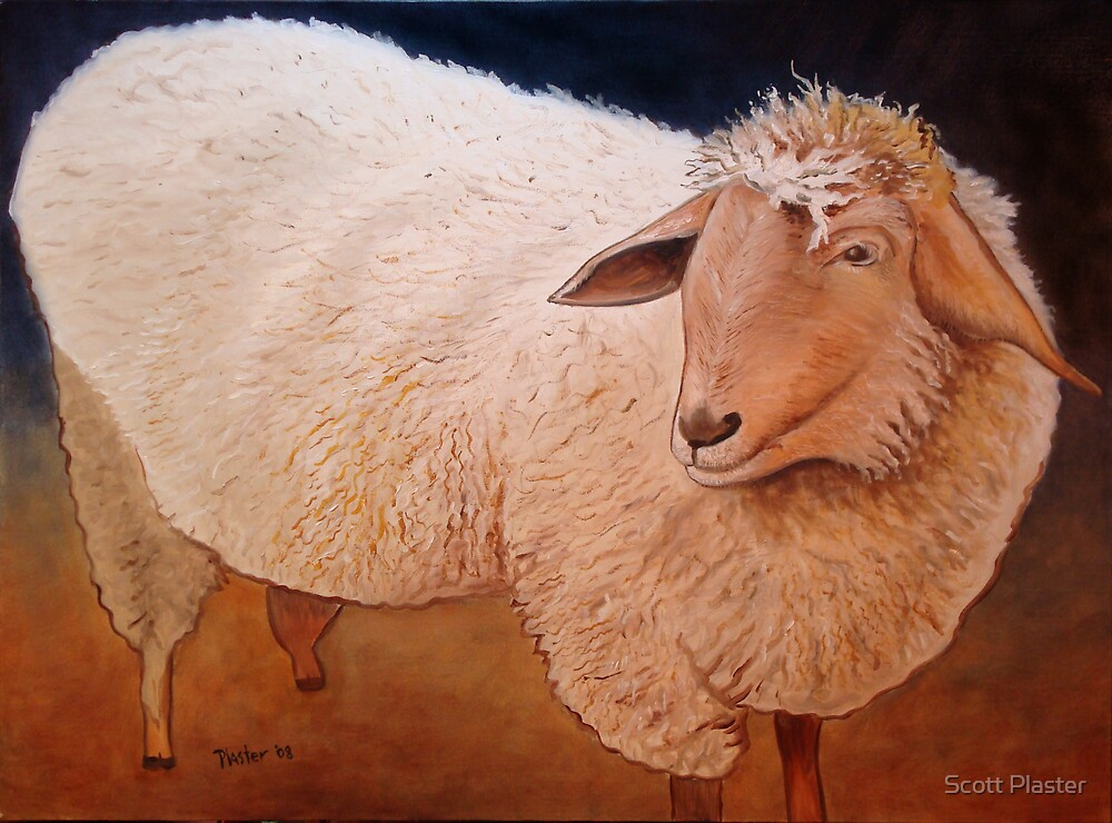 Shaggy Sheep by Scott Plaster