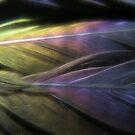 Feathers by Annika Strömgren