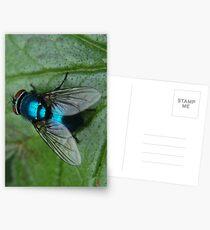 Bluebottle Postcards