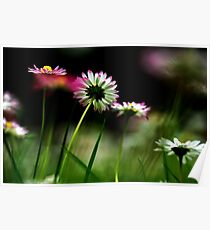 Flowering daisies in a garden with a lush green background Poster