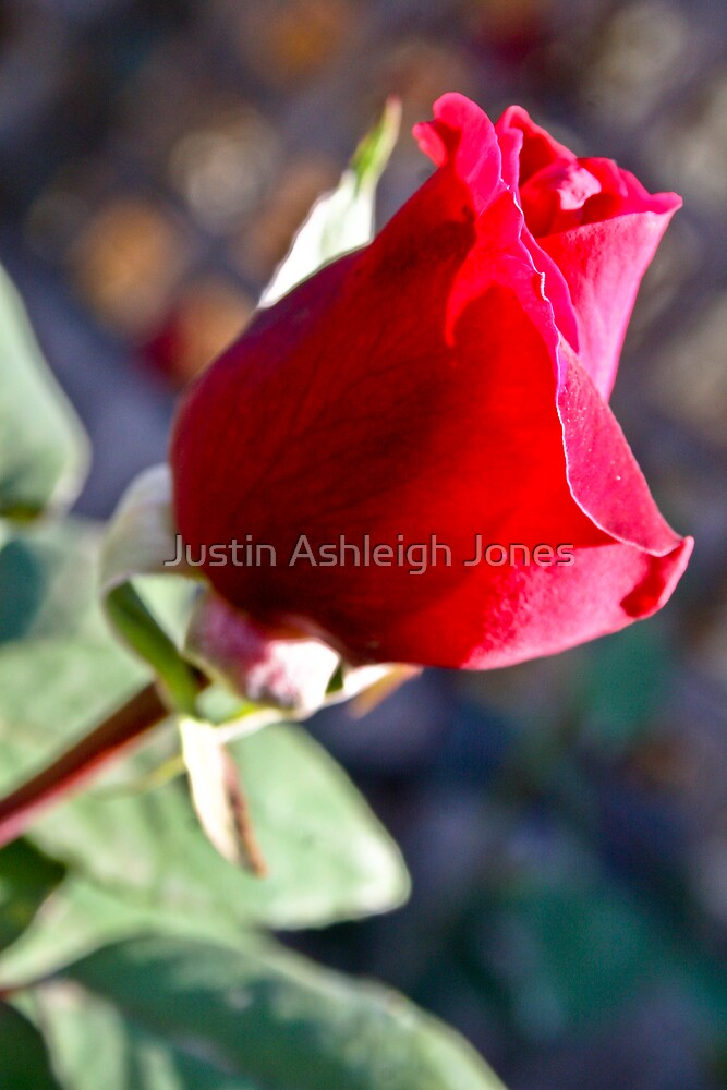 The Romance by Justin Ashleigh Jones