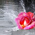 rose making a splash by lensbaby