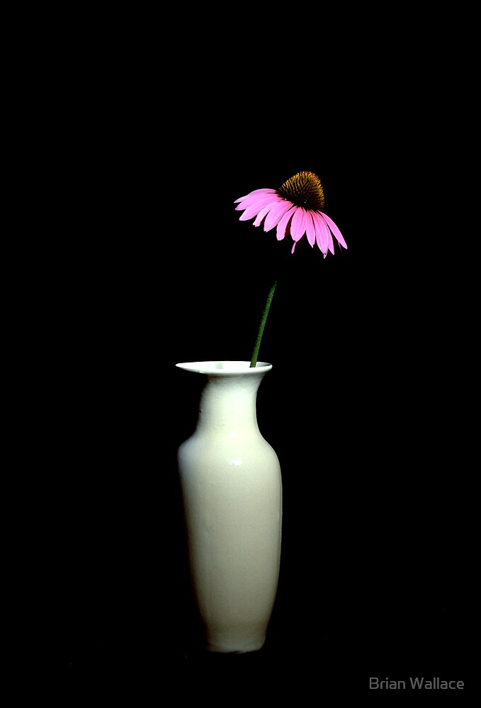 coneflower still life by Brian Wallace