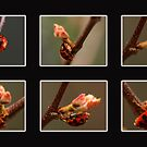 Ladybug Poster by Richard G Witham
