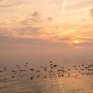 Buttery Soft Sunrise With Cormorants by Georgia Mizuleva