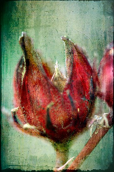 Roselle by Jules Campbell
