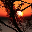 Spanish Moss at Sunset by Terri~Lynn Bealle