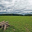 A pile of wood by Kurt  Tutschek