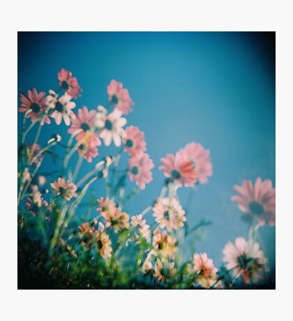 Daisy Ghosts Photographic Print