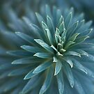 Blue Leaves 1 by farmboy