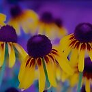 Coneflowers in Abstract by John Butler