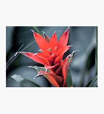 Great flower 2 Photographic Print