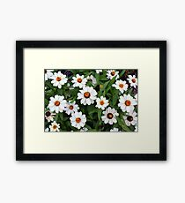 Natural background with white flowers and green leaves  Framed Print