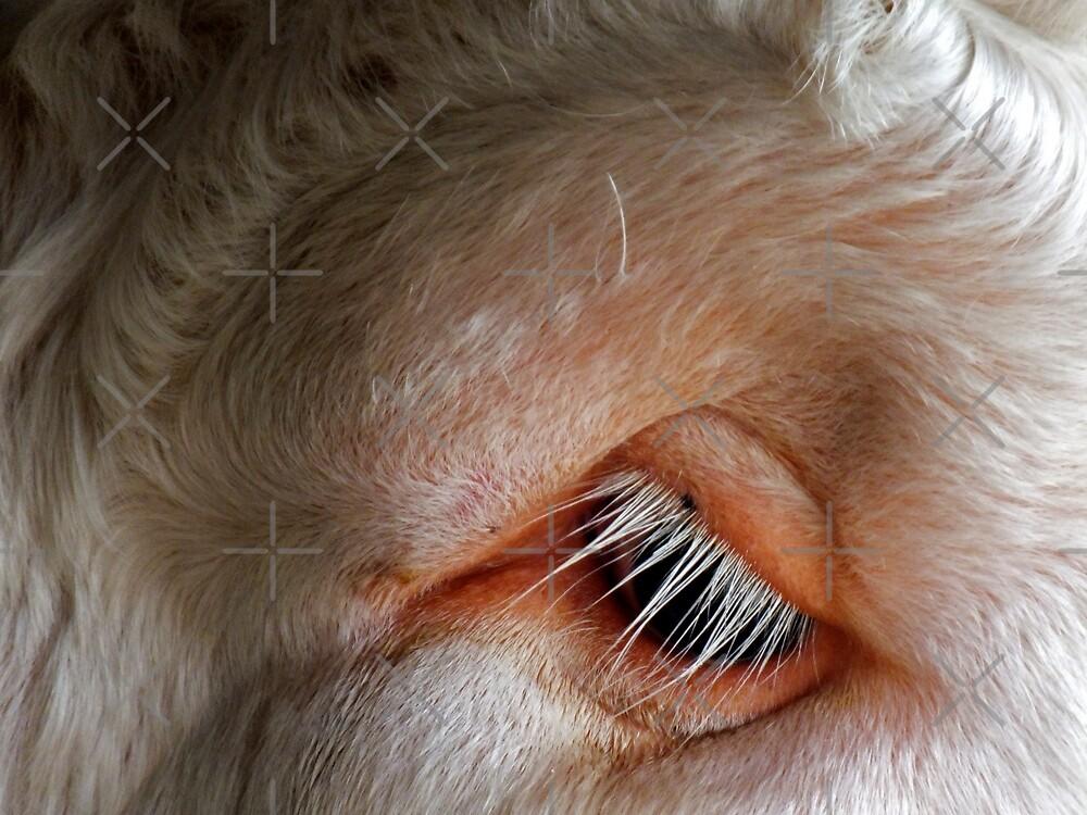 Bulls eye by Yampimon