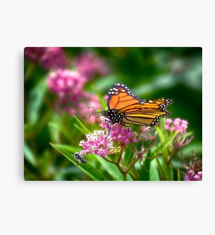Open Wing Monarch Canvas Print