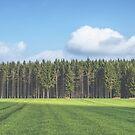 Odenwald von nurmut