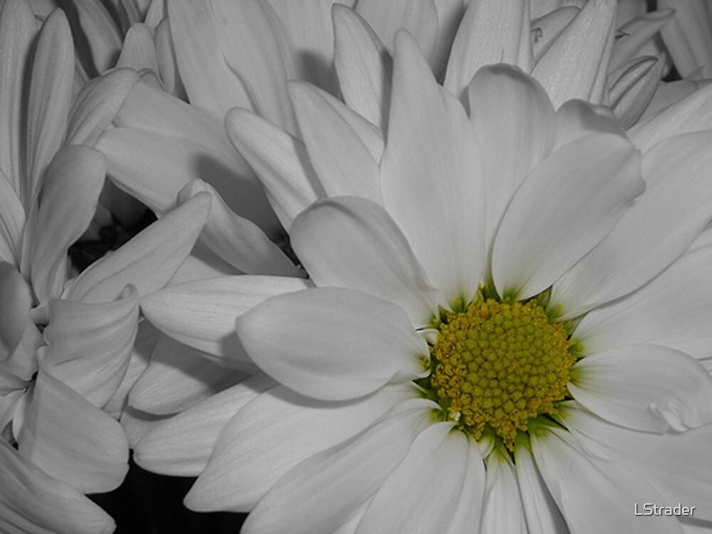 White Flower 2 by LStrader
