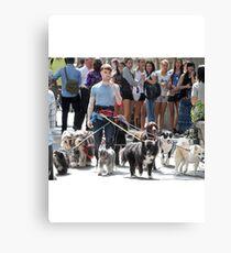 Daniel Radcliffe Walking Dogs Canvas Print