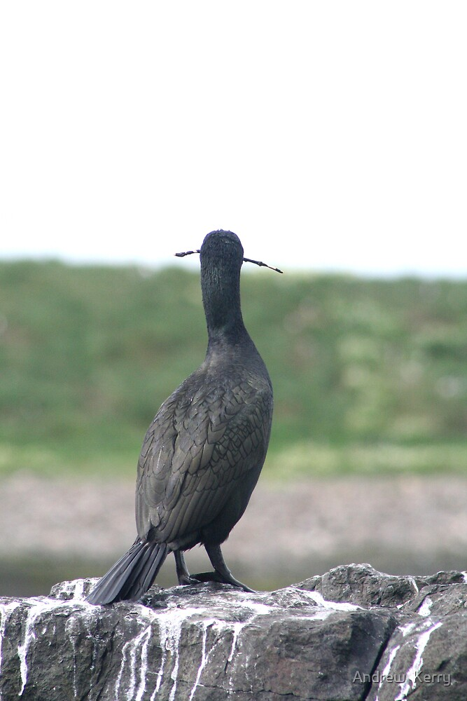 Shag by Andrew  Kerry