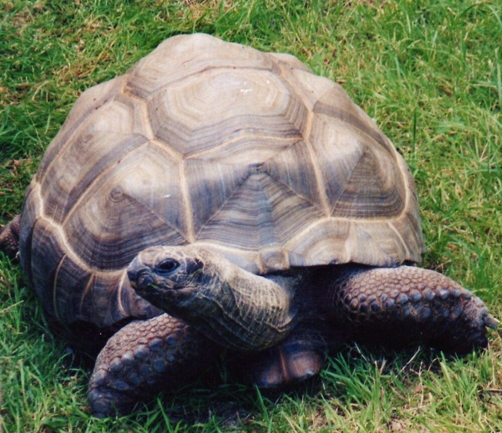 turtle by jackie2012