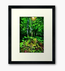 Stackpole Rain Forest .(best viewed large) Framed Print