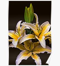 Giant Lillies Poster