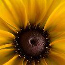 Sunny Rudbeckia by Ann Garrett